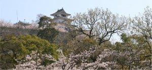 丸亀城と桜