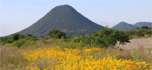 飯野山とコスモス